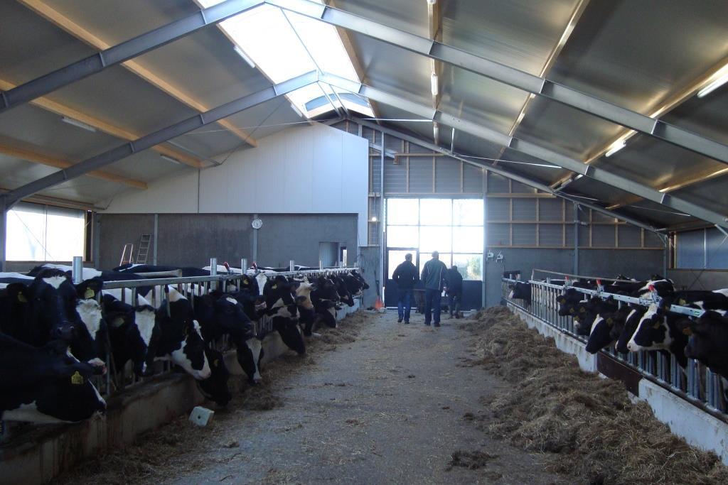 10Nieuwbouw-renovatie melkvee-jongveestal Grote Sloot te Schagerbrug