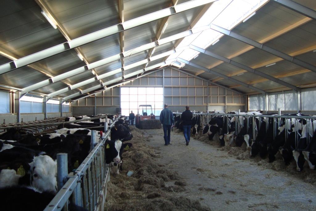 8Nieuwbouw-renovatie melkvee-jongveestal Grote Sloot te Schagerbrug